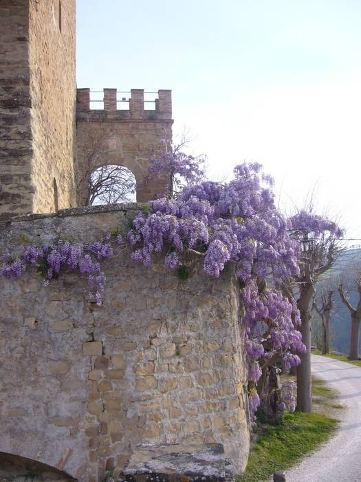 A huge and very old wisteria clothes the ancient walls