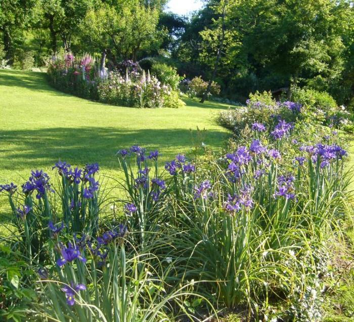 A border of blue irises