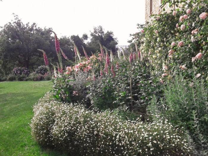 Grande aiola di rose e digitali bordata di erigeron karvinskianus