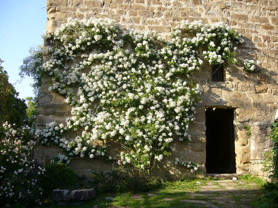 The Rambler Rose Wedding Day On Door Of Horseguards Hall